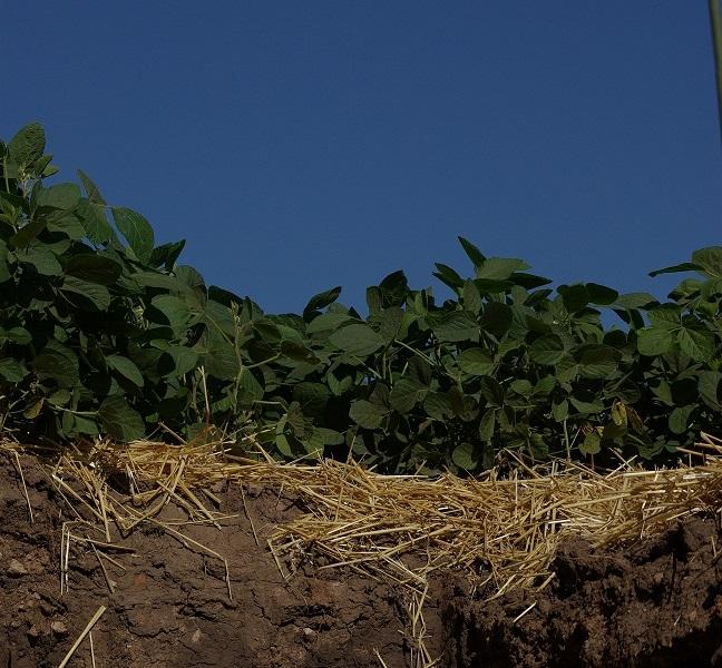 Muestreo de suelos para manejo de la nutrición de cultivos. Por Ing.Agr.(M.Sc.) A.Bianchini