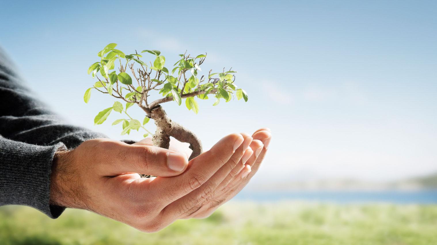 Sustentabilidad. Por Florencia Sambito