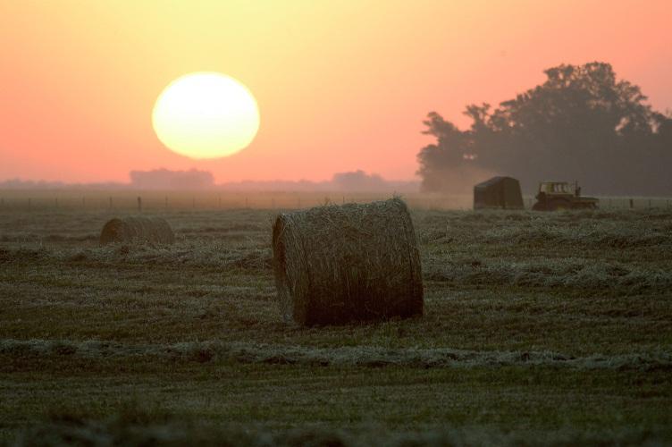 Agrotendencias. Perspectivas del mercado de carnes y de trigo