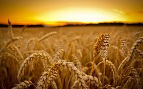 La hora de los cereales