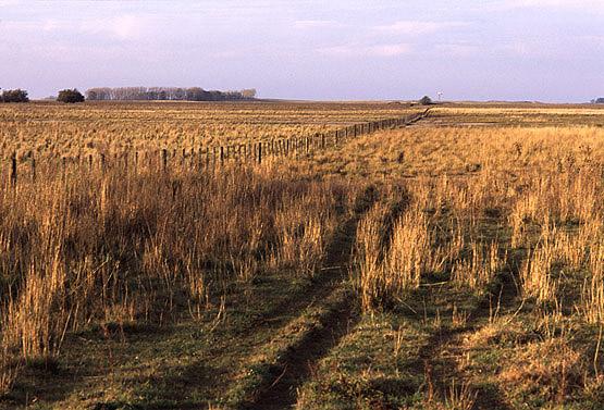 Fertilizacion de pasturas y verdeos invernales