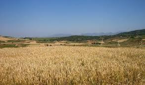 Implicancias del cambio climático sobre el rendimiento de los cereales de invierno en la Región Pampeana