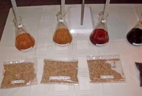 Se destilaron maltas para comparar calidad