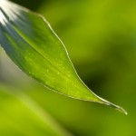 Densidad de Siembra en Maíces para Silaje de Planta Completa