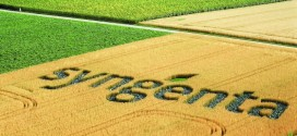 Syngenta lanza Red Raíces