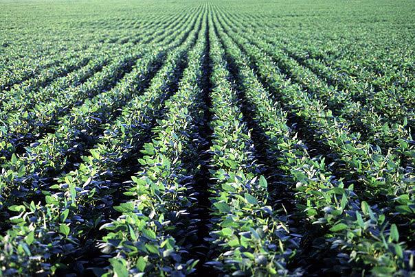 Efectos de la combinación del grupo de madurez y la fecha de siembra sobre el rendimiento del cultivo de soja