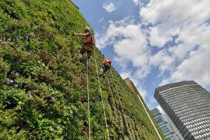 """El jardín -llamado """"el pulmón verde de Victoria""""- en Londres."""
