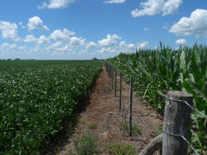 Los desafíos de aumentar la productividad agrícola y también conservar la biodiversidad en los paisajes rurales. Poggio