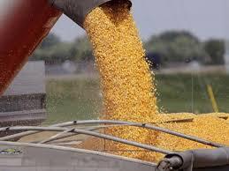 Simplificación en la Registración de Contratos de Compra-venta de granos  (RG (AFIP) 3744/2015)- Hector Tristan