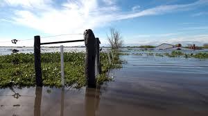 Anegamiento e inundaciones: UN NUEVO CONTEXTO PARA PLANTEAR LA INOCULACIÓN