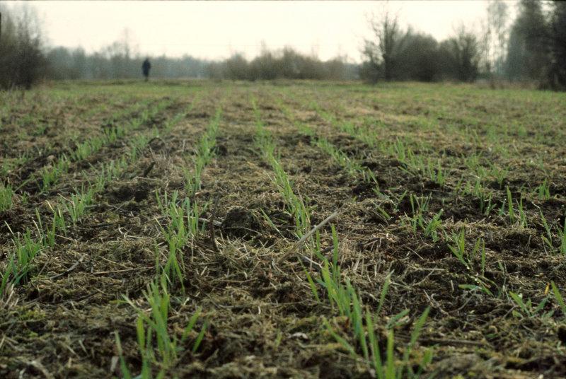 Evaluación del comportamiento de trigo, vicia y avena como cultivos de cobertura en soja