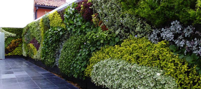 Un jardín en mi pared- Casafe