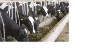 vaca2-01 en baja