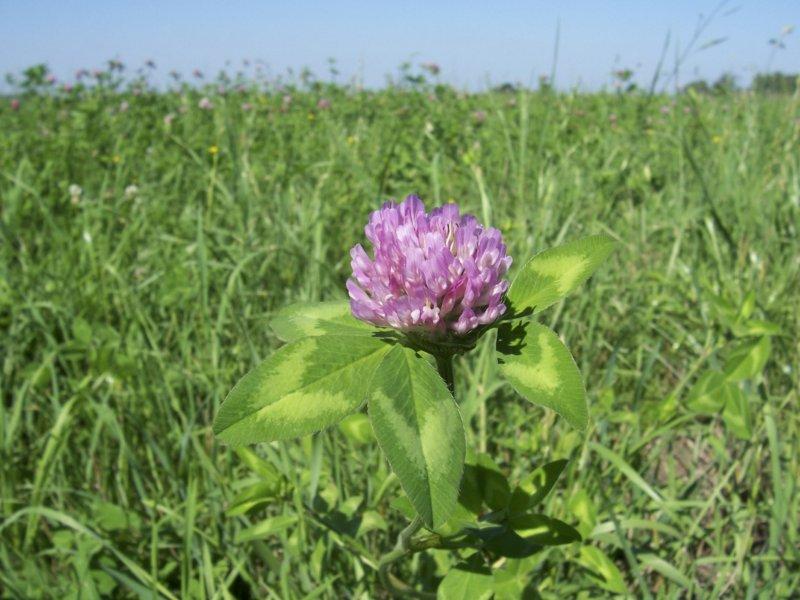 La fertilización de pasturas reduce sustancialmente costos fijos