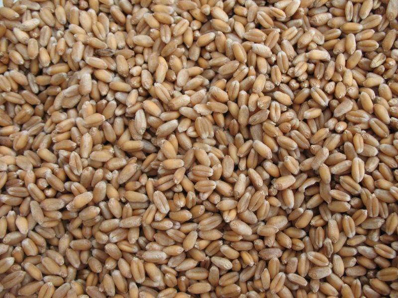 Sistiva, innovación en fungicidas para el tratamiento de semillas