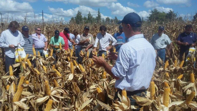 Nidera presentó su nueva línea de maíces para la Cuenca del Salado