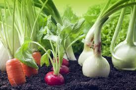 ¿Alimentos orgánicos o convencionales? Algunas observaciones. Por: Ing. Agr. Esp. Mec. Agr. Ramiro E. Cid