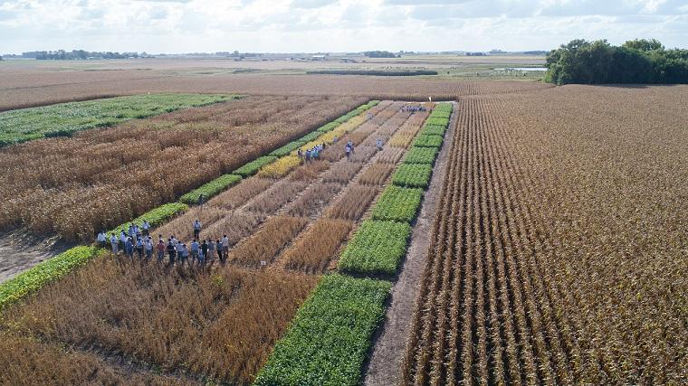 Nidera Semillas y BASF presentaron la tecnología Clearfield Plus en maíz
