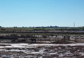 Claves para el aprovechamiento agronómico de residuos pecuarios- Dr. Martín Torres Duggan