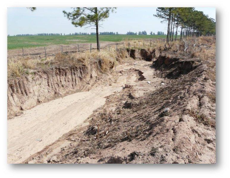En la Argentina, se pierden US$ 30 M al año por erosión hídrica- Prensa INTA