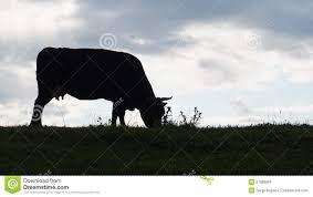 Diferimiento del impuesto a las ganancias en establecimiento de hacienda bovina de cría-Por: Larroudé