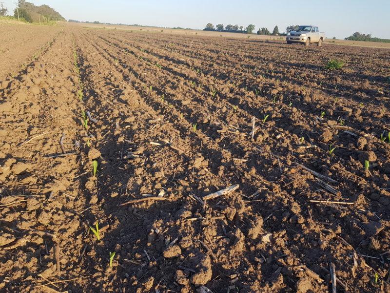Hacia una transición agroecológica en zonas periurbanas. De Fontezuela -Partido de Pergamino.