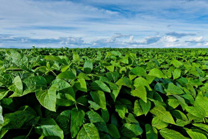 BASF presenta Priaxor®, fungicida para soja.