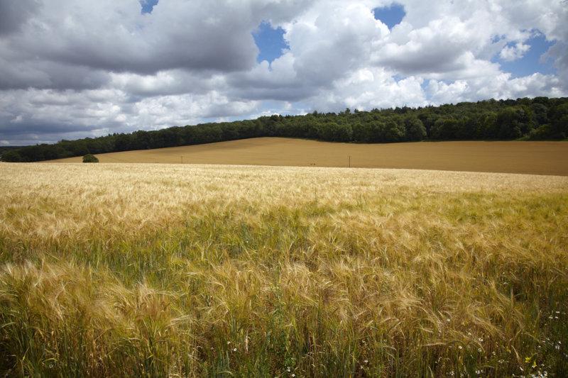 Costo beneficio en cultivos de verano