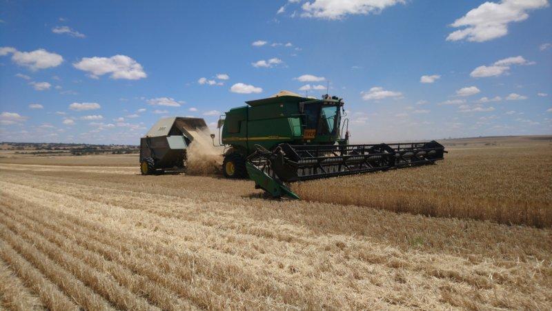 Bioeconomía al trigo