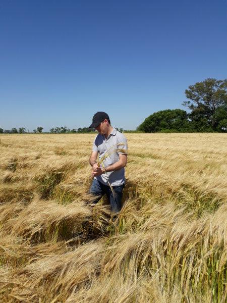 Fertilización de trigo en la Región Pampeana: desafíos y oportunidades para mejorar el diagnóstico nutricional en tiempos difíciles
