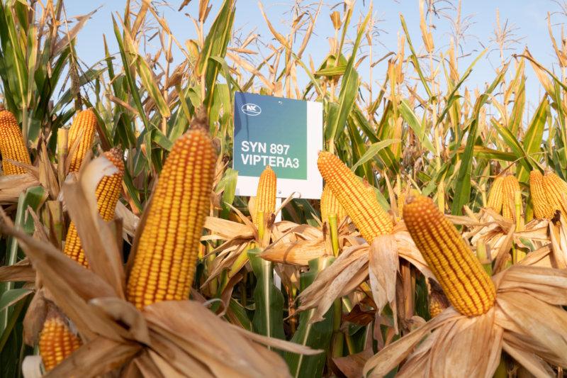 NK y su campaña de maíz