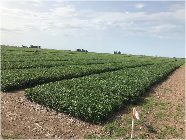 Red Nacional de Evaluación de cultivares de SOJA (RECSO)