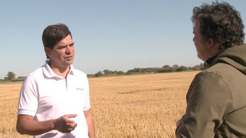 Altos rendimientos en trigo